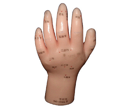 HL5 手针灸模型(自然大)