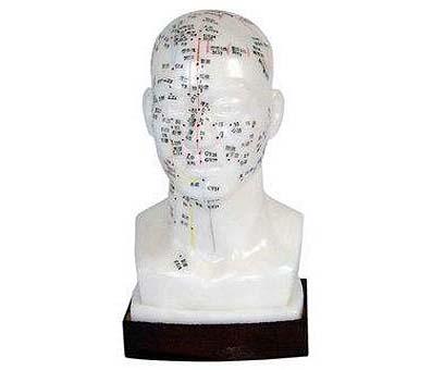 HL20 头部四功能针灸模型