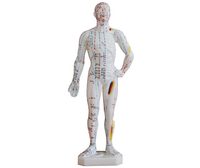 HL/XC506 人体针灸模型...