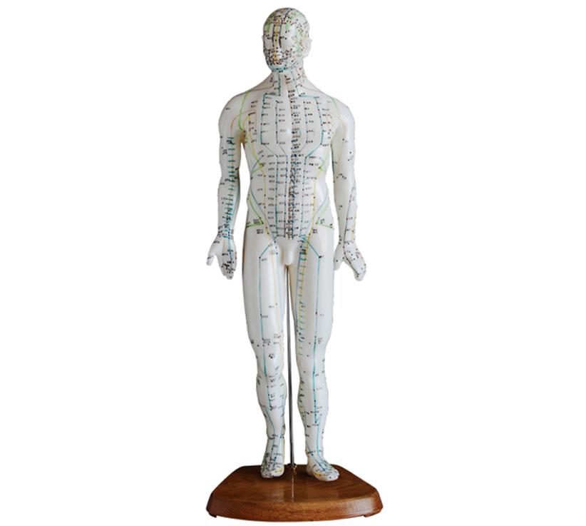 HL/XC505 人体针灸模型...