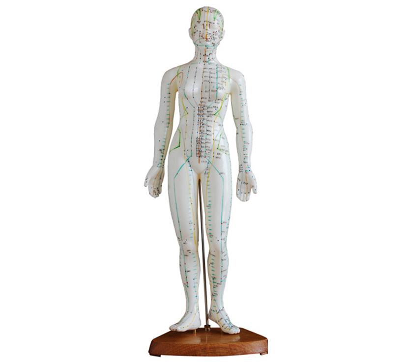 HL/XC504 人体针灸模型48CM(女)