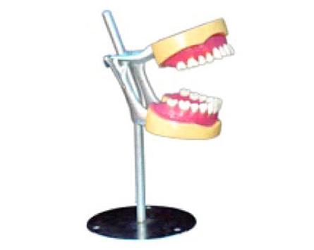HL/Y10037-2 拔牙模型...