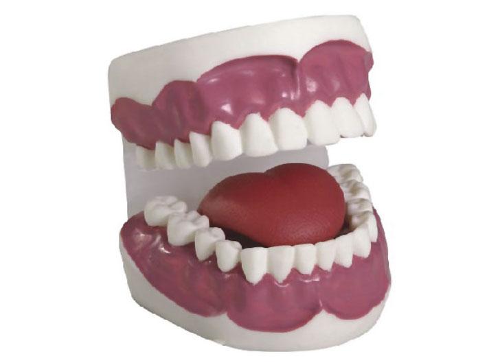 HL/K2 牙护理保健模型...