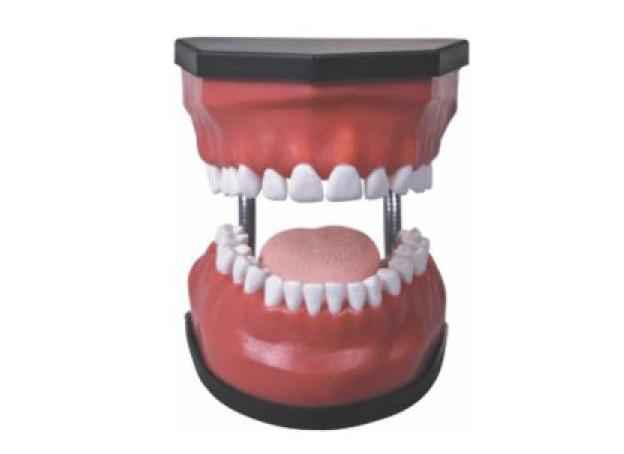 HL/K3 豪华型牙护理保...