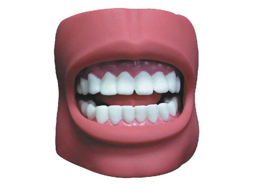 HL/K4 牙护理保健模型...